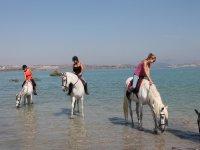 One hour horseback riding