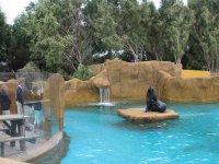 Habitat de los leones marinos