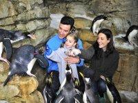 Habitat de los pinguinos