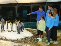 Visitando los pinguinos