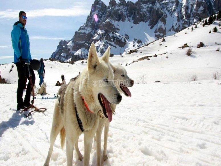 Mushing en el Valle de Tena - Foto de valledetena.com