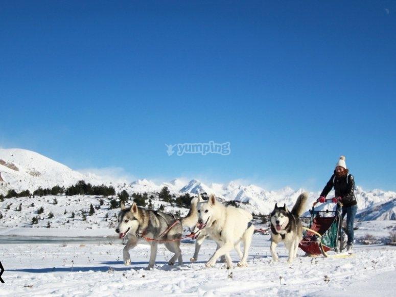 Mushing en el Pirineo Oscense. - Foto de valledetena.com