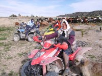 Group of quads