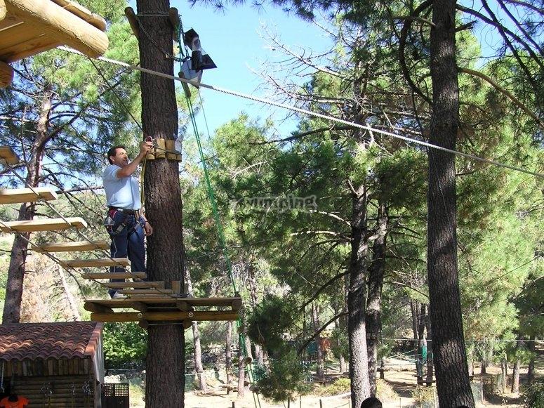 Tree climbing circuit