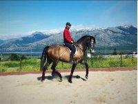 En la sierra de Madrid a caballo