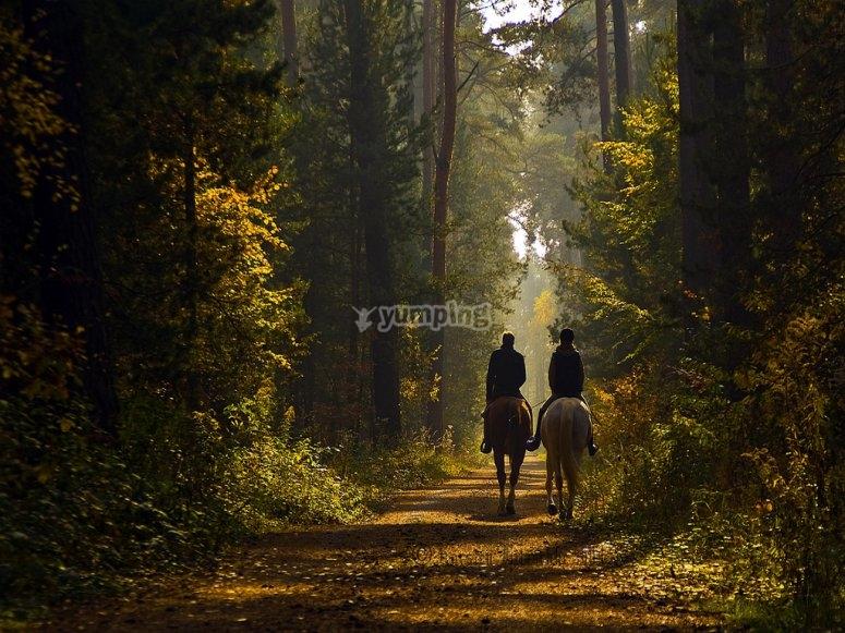 Paseo a caballo en Madrid