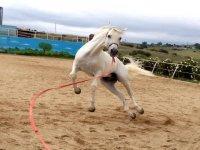 Uno de nuestros caballos