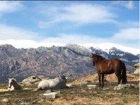Caballos descansando en la sierra
