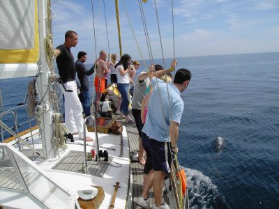 Fun Sail Paseos en Barco