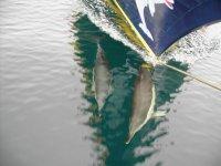 Delfines al pie del barco