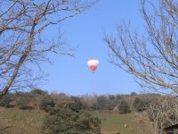 Balloon over the cattle