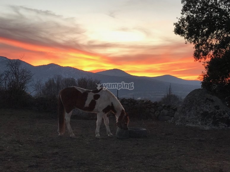 Horse eating with the sunset