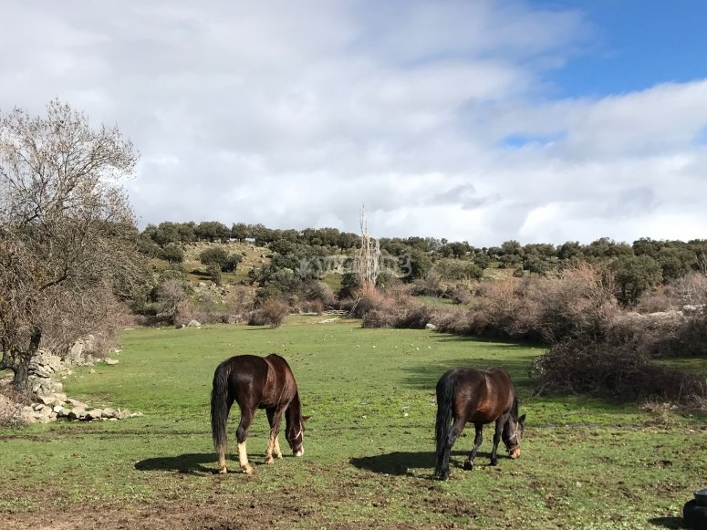 Horses in the outdoors