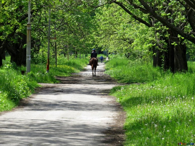 Ruta a caballo por la Sierra de Madrid