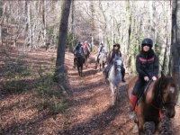 Caballos saliendo del bosque