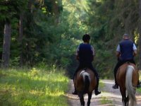 在树林之间的马
