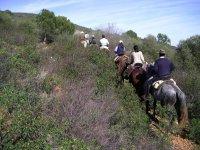 Sulla strada con i cavalli