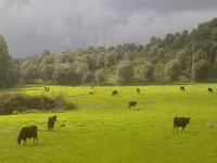 paseo al campo