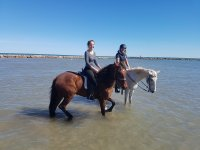 On horses on the seashore