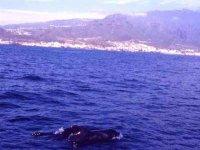 Our coast full of cetaceans