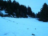 Bosques de Soldeu