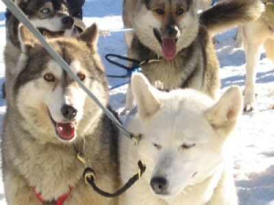 Formigal Mushing