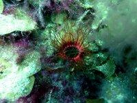 Fauna subacuatica de brillantes colores