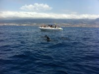 Excursion to see dolphins in Tenerife