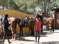 Preparando caballos