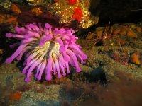 在海洋物种中潜水