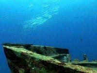 fondo marino gran canaria