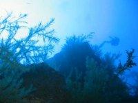 迷人的海洋植物物种