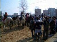 organizziamo passeggiate a cavallo