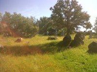 Campo de Pepino