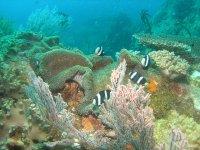 Submarinism in Alicante