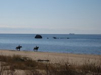 Equitazione sulla spiaggia