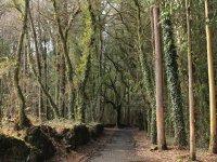 Fondosos bosques del Camino