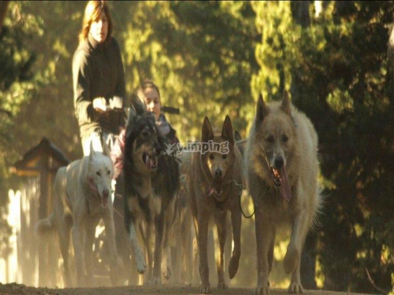 Perros de trineo en Andorra