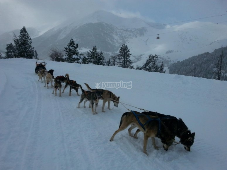 Perros tirando de trineo en Andorra