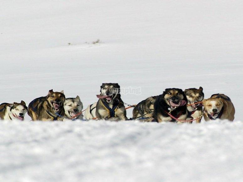 Ruta de trineo tirada por perros