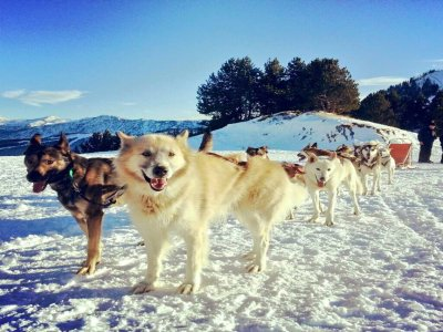Mushing in Andorra 2 km adulti