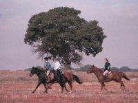 Recorriendo Andalucia a caballo