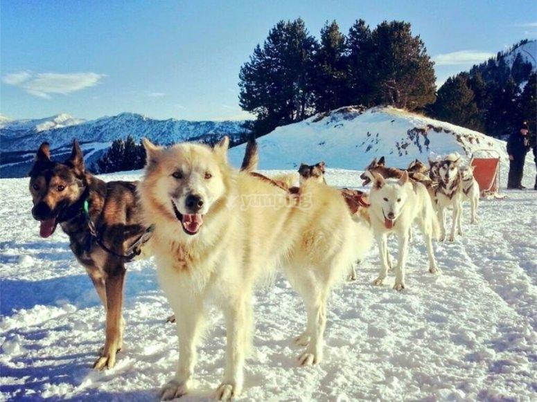 Los perros sobre la nevada