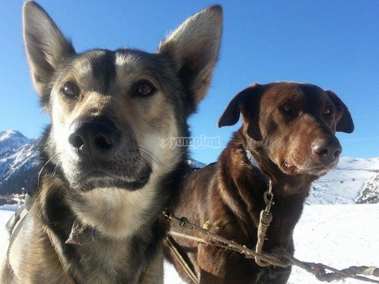 Perros listos para la ruta