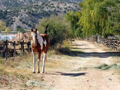 Ruta a caballo junto al Caminito del Rey 2 horas