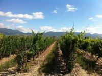 值得一游的拉里奥哈(La Rioja)葡萄园,从