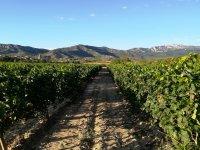 El encanto del mundo vinícola en Labastida