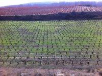 Rutas en BTT por viñedos riojanos