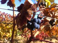 We learn the production process of Rioja wine