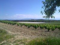 拉里奥哈的优质葡萄酒旅游